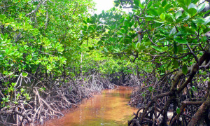 symposium-wiomsa-mangrove-mats