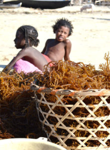 wiomsa-marine-resources-ocean-ecology-research-capacity-development-Seaweed-collectpng